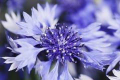 Abstrakcjonistyczny kwiatu zbliżenie Obraz Stock