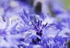 Abstrakcjonistyczny kwiatu zbliżenie Obraz Royalty Free