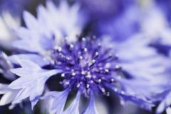 Abstrakcjonistyczny kwiatu zbliżenie Zdjęcia Royalty Free