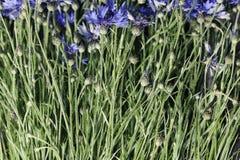 Abstrakcjonistyczny kwiatu zbliżenie Obrazy Royalty Free