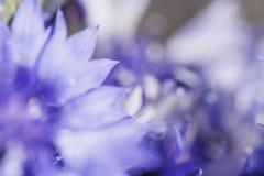 Abstrakcjonistyczny kwiatu zbliżenie Fotografia Stock