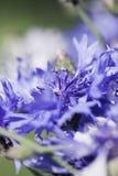 Abstrakcjonistyczny kwiatu zbliżenie Zdjęcie Royalty Free
