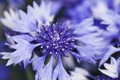 Abstrakcjonistyczny kwiatu zbliżenie Zdjęcie Stock