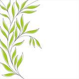 Kwiecisty tło z zielonymi liśćmi ilustracji