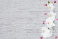 Abstrakcjonistyczny kwiecisty wzór, mali kwiaty i biała orchidea na drewnianym tle, odgórny widok, mieszkanie nieatutowy, Zdjęcia Stock
