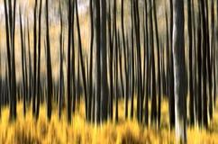 abstrakcjonistyczny las Obrazy Royalty Free