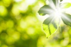 Abstrakcjonistyczny lata bokeh z zielonymi liśćmi Obraz Royalty Free