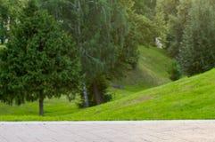 Abstrakcjonistyczny lato natury park Fotografia Royalty Free