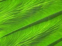 abstrakcjonistyczny liść Zdjęcie Royalty Free