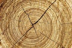 abstrakcjonistyczny ślimakowaty drewno Obraz Royalty Free