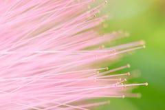 abstrakcjonistyczny makro- kwiat Obrazy Stock