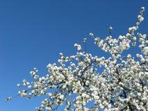 Abstrakcjonistyczny marzycielski wizerunek wiosna biel kwitnie drzewa Zdjęcia Stock