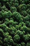 abstrakcjonistyczny materialny organicznie Zdjęcia Royalty Free