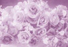 Abstrakcjonistyczny miękka część stylu róży kwiat Obraz Stock