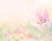 Abstrakcjonistyczny miękki cukierki menchii kwiatu tło od lelui kwitnie zdjęcie stock