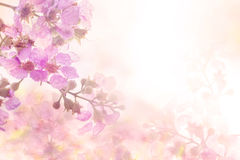 Abstrakcjonistyczny miękki cukierki menchii kwiatu tło od Plumeria frangipani kwitnie Zdjęcia Stock