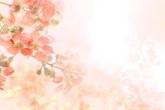 Abstrakcjonistyczny miękki słodkiej pomarańcze kwiatu tło od Plumeria frangipani kwitnie Obrazy Royalty Free