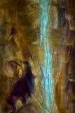 Abstrakcjonistyczny micrograph ćma waży przypominać jamy pai i rozdziela Zdjęcia Stock