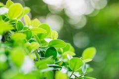 Abstrakcjonistyczny natura widok zielone rośliny, świeżość zieleni liście obraz royalty free