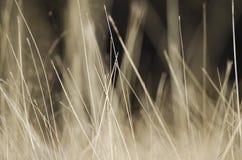 Abstrakcjonistyczny naturalny tło z dziką brąz trawą Krajobraz z suchą stepową trawą fotografia royalty free