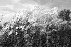 Abstrakcjonistyczny natury tło kwiaty w lecie i wiośnie zdjęcie royalty free