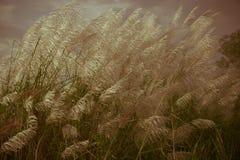 Abstrakcjonistyczny natury tło kwiaty w lecie i wiośnie Fotografia Stock