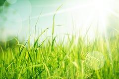 Abstrakcjonistyczny natury tło z trawą Fotografia Stock
