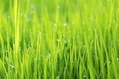 Abstrakcjonistyczny natury tło z trawą i kroplami, selekcyjna ostrość Fotografia Royalty Free