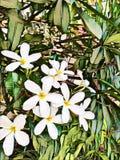 Abstrakcjonistyczny obraz biali kwiaty i zieleń liście - tło wizerunek royalty ilustracja