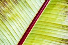 Abstrakcjonistyczny organicznie tekstury tło liść Obrazy Royalty Free