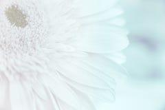 Abstrakcjonistyczny płatka kwiat Fotografia Royalty Free