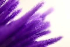 Abstrakcjonistyczny pastel głęboki - purpurowa błękitnego i czerwonego koloru mikstura trawiasty Zdjęcia Stock