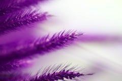 Abstrakcjonistyczny pastel głęboki - purpurowa błękitnego i czerwonego koloru mikstura trawiasty Fotografia Royalty Free