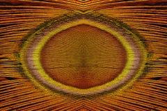 Abstrakcjonistyczny pawi piórek wzór Zdjęcia Stock
