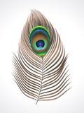 abstrakcjonistyczny piórkowy paw Obrazy Royalty Free