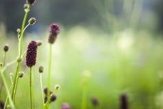 Abstrakcjonistyczny piękny delikatny wiosna kwiatu tło Fotografia Stock