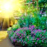Abstrakcjonistyczny plamy tło kolorowa natura Zdjęcie Royalty Free