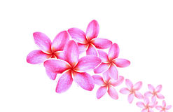 Abstrakcjonistyczny Plumeria kwiat Fotografia Royalty Free