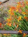 abstrakcjonistyczny pożarniczy kwiatu płatków widmo zdjęcia stock