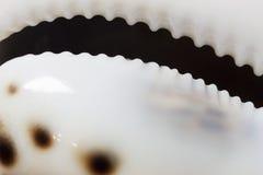 Abstrakcjonistyczny seashell tło Zdjęcie Royalty Free