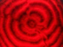 abstrakcjonistyczny tła abstrakcjonistyczny zakończenie Fotografia Stock