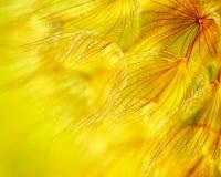 abstrakcjonistyczny tła dandelion kwiat zdjęcie stock
