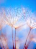 abstrakcjonistyczny tła dandelion kwiat obrazy stock