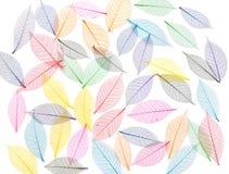 abstrakcjonistyczny tła liść kościec Obrazy Royalty Free