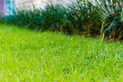 abstrakcjonistyczny tła miasta trawy zieleni gazonu parka tekstury widok bell świątecznej element projektu Zdjęcie Stock