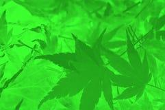 abstrakcjonistyczny tła zieleni liść Zdjęcia Royalty Free