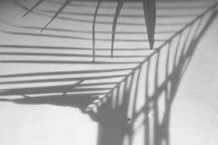 Abstrakcjonistyczny tło cienia palmowy liść na białej ścianie Zdjęcia Stock