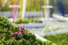 Abstrakcjonistyczny tło park, trawa i światło miasta, obraz royalty free