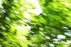 Abstrakcjonistyczny tło plamy zieleni drzewo, poruszająca kamera podczas gdy strzelający obraz royalty free