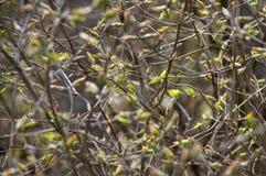 Abstrakcjonistyczny tło roślinność Obraz Stock